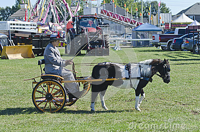Lady in Buggy with Miniature Horse at Country Fair Editorial Photography