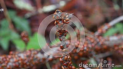 Lady Bugs wintern Staatspark in Kalifornien stock video