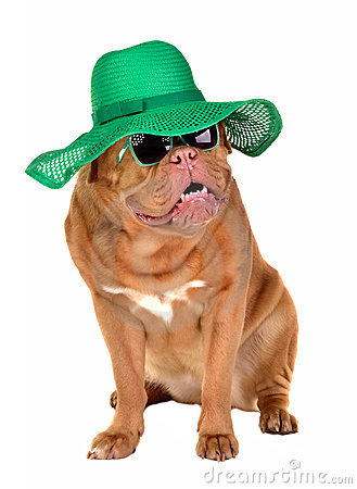 Free Lady Dog Wearing Straw Hat And Sun Glasses Stock Photos - 19318343