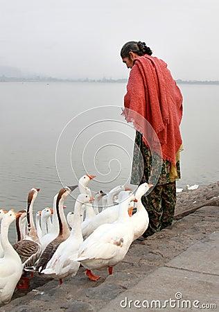 Lady feeding the birds Editorial Photography
