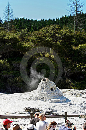 Lady Knox Geyser, New Zealand Editorial Photo