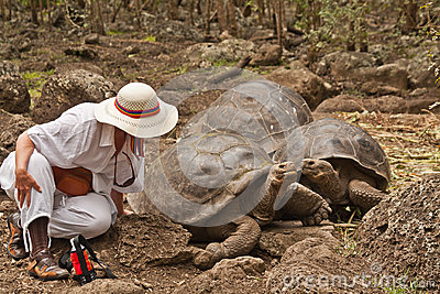 The Lady and the Tortoise