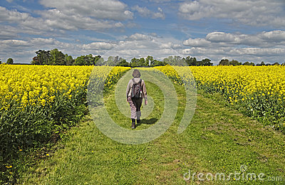 Lady walking between Fields of Yellow Rapeseed