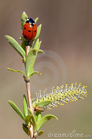 Free Ladybird And Spring Stock Photography - 14096312