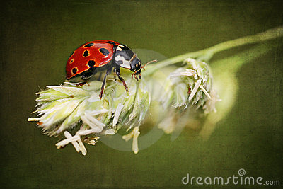 Ladybird on antique grunge textured background