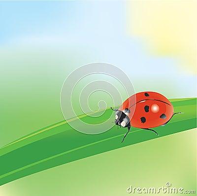 Ladybird on a blade of grass