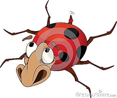Ladybird. Cartoon