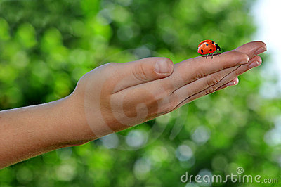 Ladybird on children s hands