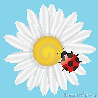Ladybird on Daisy on blue background.