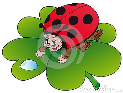 Ladybird and drop