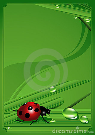 Ladybird_frame