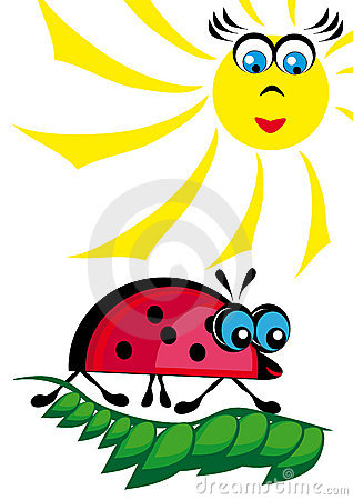 The ladybird is heated on the sun