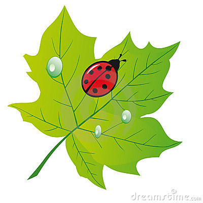 Free Ladybird On A Leaf Royalty Free Stock Images - 18424989