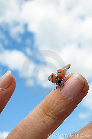 Free Ladybird On Finger Royalty Free Stock Image - 7744186