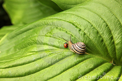Ladybird and snail