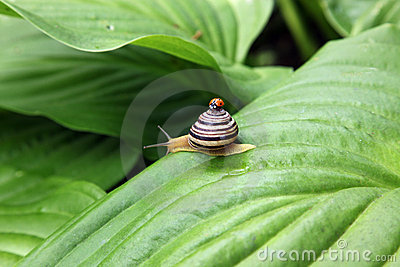 Ladybird and snail