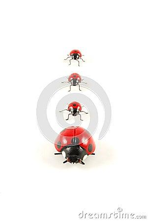 Free Ladybug 1 Stock Image - 4943471