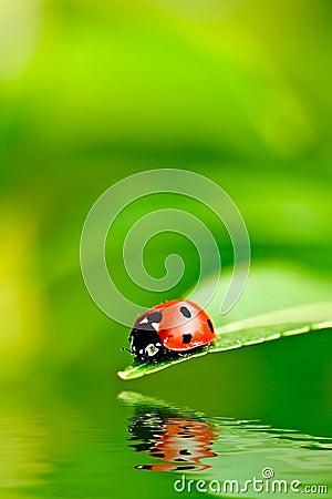 Free Ladybug Stock Images - 4199954