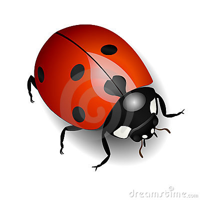 Free Ladybug Royalty Free Stock Images - 8024469