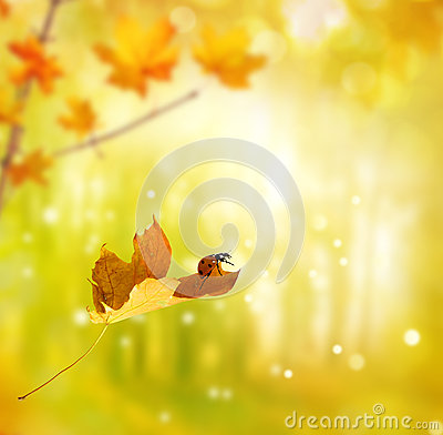 Ladybug on autumn leaf Stock Photo