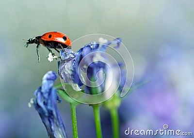 Ladybug and Bellflowers