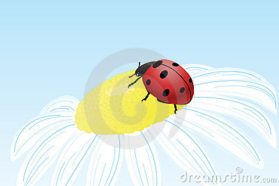 Ladybug on camomile flower
