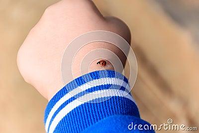 Ladybug on child`s hand
