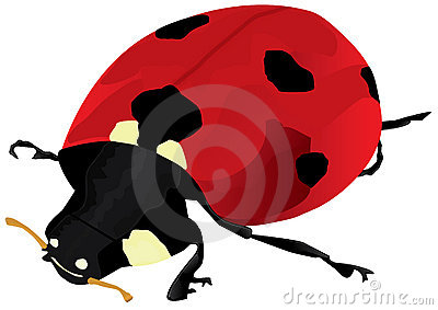 Ladybug Isolated_eps