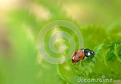 Ladybug on fern 2