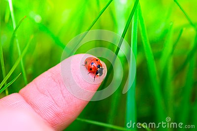 Ladybug On Fingertip Royalty Free Stock Image - Image: 14374196