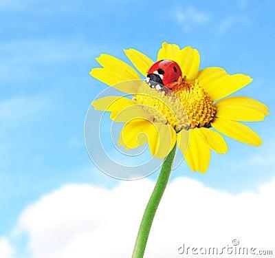 Ladybug in a flower
