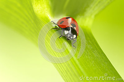 Ladybug on a green stalk
