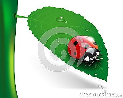 Ladybug on leaf with dew