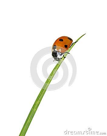 Free Ladybug On Grass Royalty Free Stock Photos - 17664628