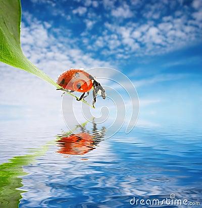 Free Ladybug On Green Leaf Royalty Free Stock Image - 3389476