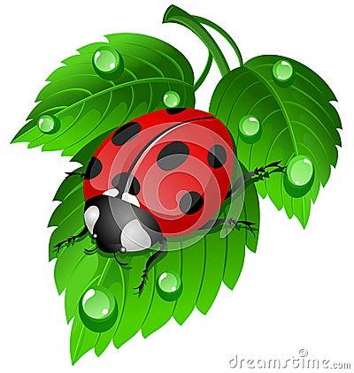 Free Ladybug On Leaf Royalty Free Stock Photos - 4440368