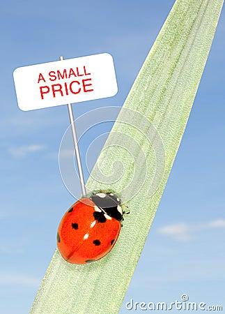 Ladybug price
