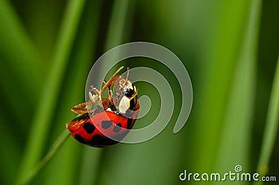 Ladybug quase na parte superior
