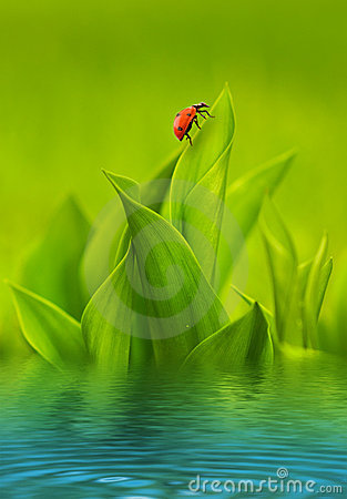 Ladybug sitting on green grass