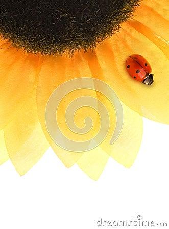 Free Ladybug Sitting On A Sunflower Royalty Free Stock Photos - 8314218