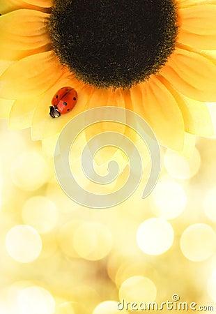 Free Ladybug Sitting On A Sunflower Royalty Free Stock Photography - 8314237