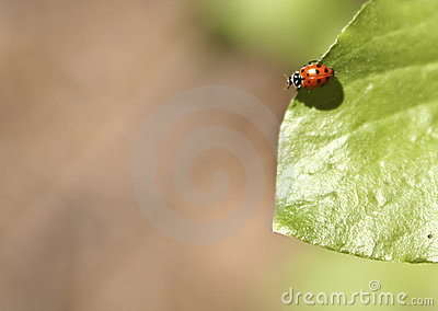 Ladybug sul foglio