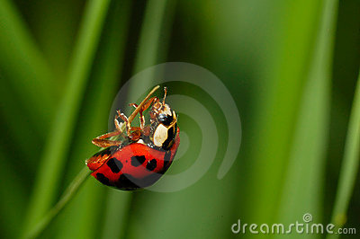 Ladybug almost at the top