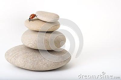 Ladybug on zen stones