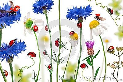 σημείο επτά λαμπριτσών ladybugs