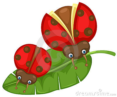 Ladybugs on the leaf