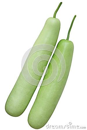 Free Lagenaria Vulgaris Fruit Stock Photos - 21028103