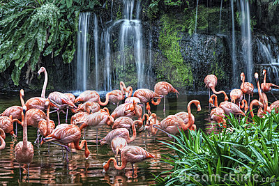 Lago flamingo no parque do pássaro de Jurong
