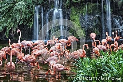 Lago flamingo no parque do pássaro de Jurong