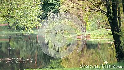 Lago Florestal com Água Calma filme